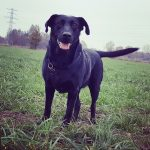 hond sunny Lianne langenkamp
